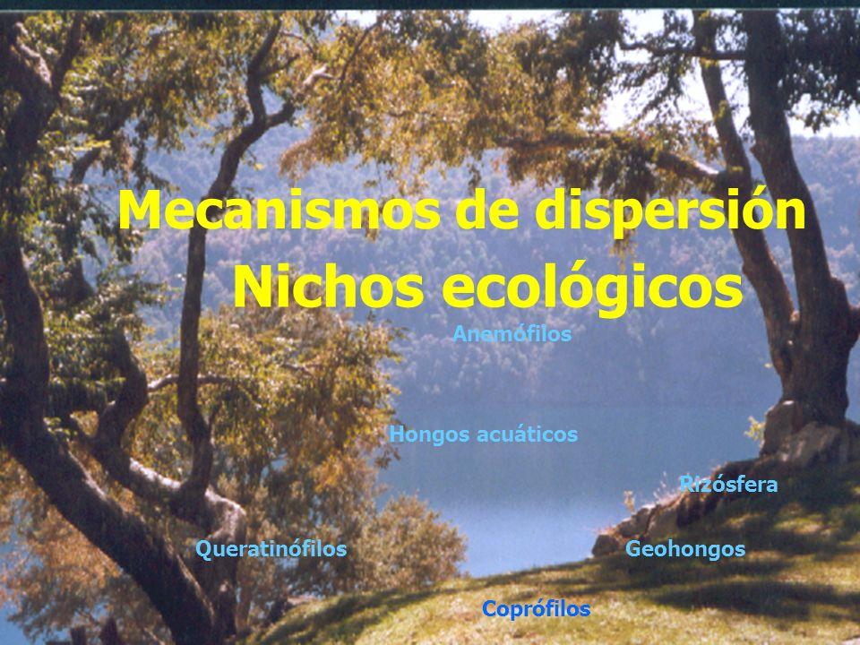 Nichos ecológicos Mecanismos de dispersión Anemófilos Hongos acuáticos