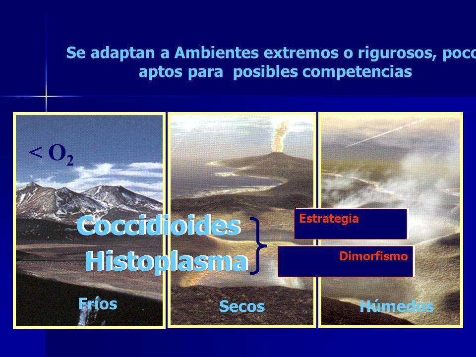 Coccidioides Histoplasma < O2