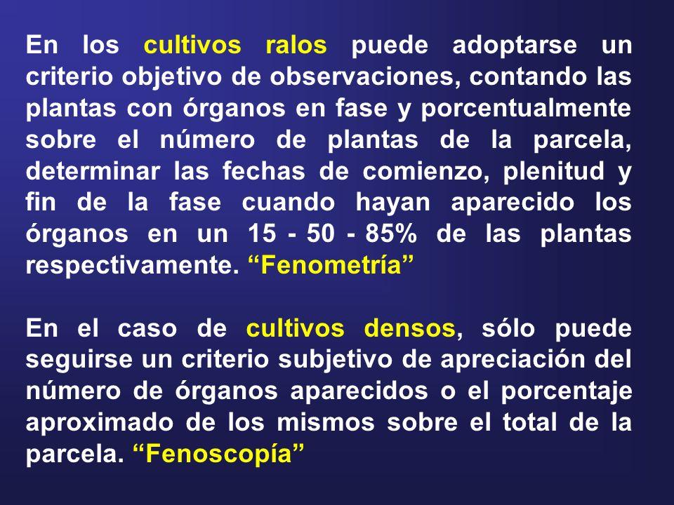 En los cultivos ralos puede adoptarse un criterio objetivo de observaciones, contando las plantas con órganos en fase y porcentualmente sobre el número de plantas de la parcela, determinar las fechas de comienzo, plenitud y fin de la fase cuando hayan aparecido los órganos en un 15 - 50 - 85% de las plantas respectivamente. Fenometría