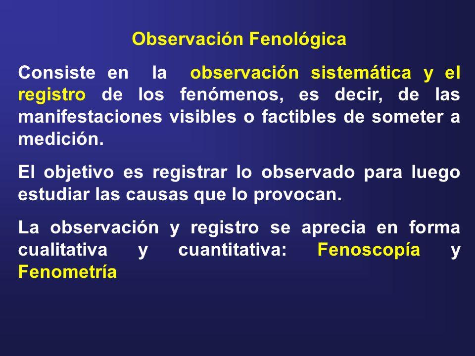 Observación Fenológica
