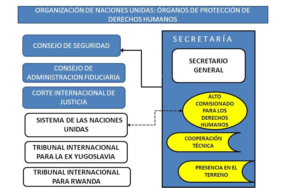 ORGANIZACIÓN DE NACIONES UNIDAS: ÓRGANOS DE PROTECCIÓN DE DERECHOS HUMANOS