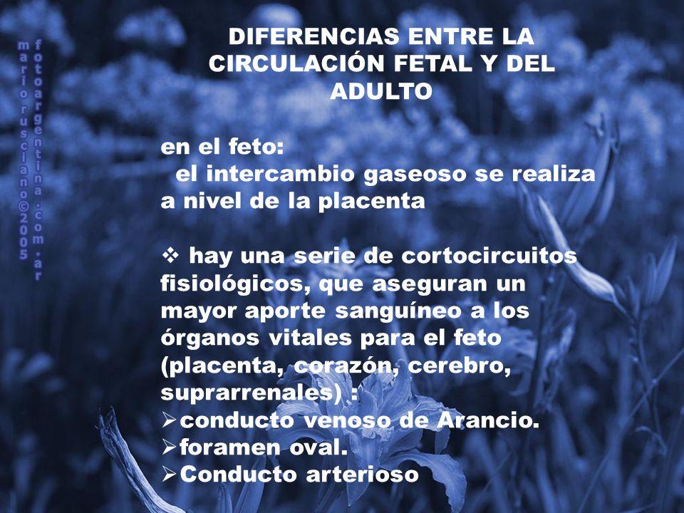 DIFERENCIAS ENTRE LA CIRCULACIÓN FETAL Y DEL ADULTO
