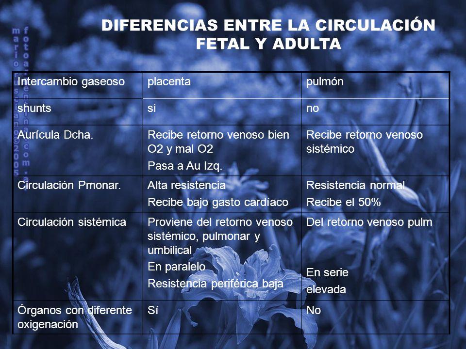 DIFERENCIAS ENTRE LA CIRCULACIÓN FETAL Y ADULTA