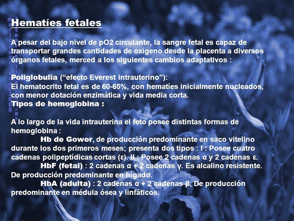 Hematíes fetales