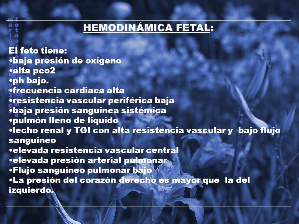HEMODINÁMICA FETAL: El feto tiene: baja presión de oxígeno alta pco2