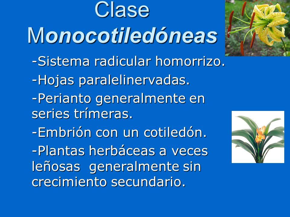 Clase Monocotiledóneas
