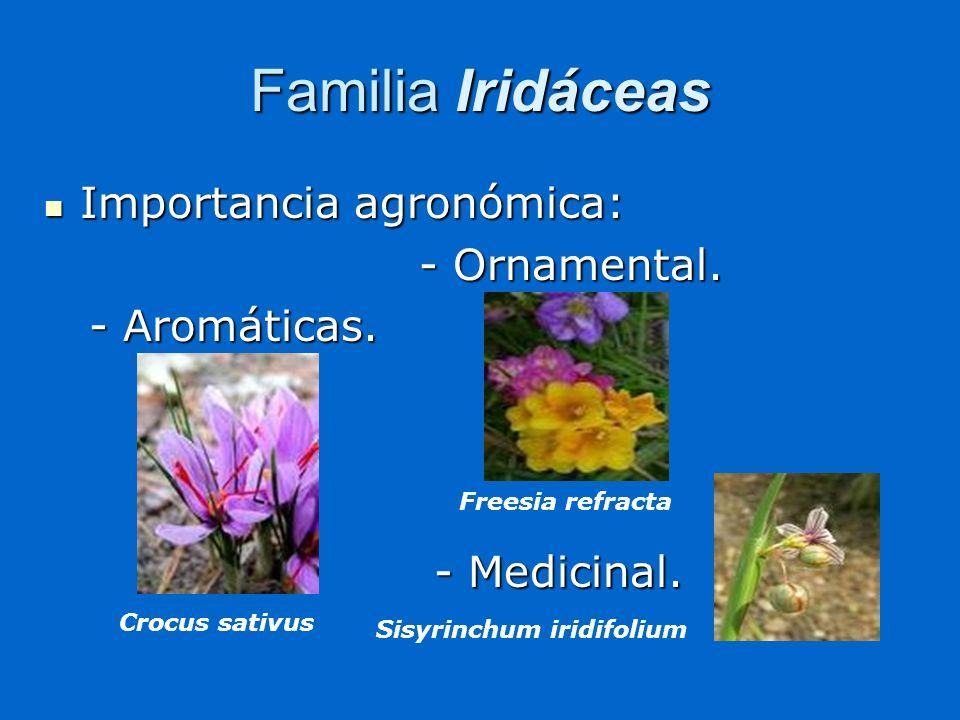 Familia Iridáceas Importancia agronómica: - Ornamental. - Aromáticas.