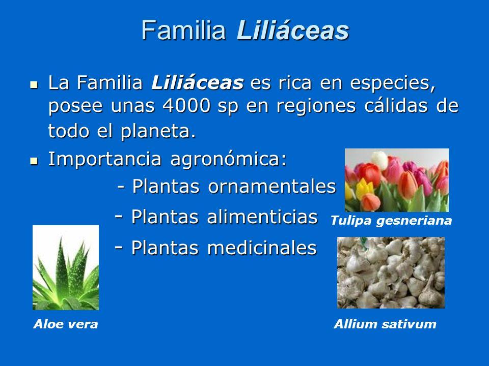 Familia Liliáceas - Plantas alimenticias - Plantas medicinales
