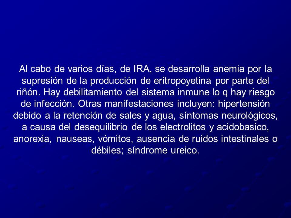 Al cabo de varios días, de IRA, se desarrolla anemia por la supresión de la producción de eritropoyetina por parte del riñón.