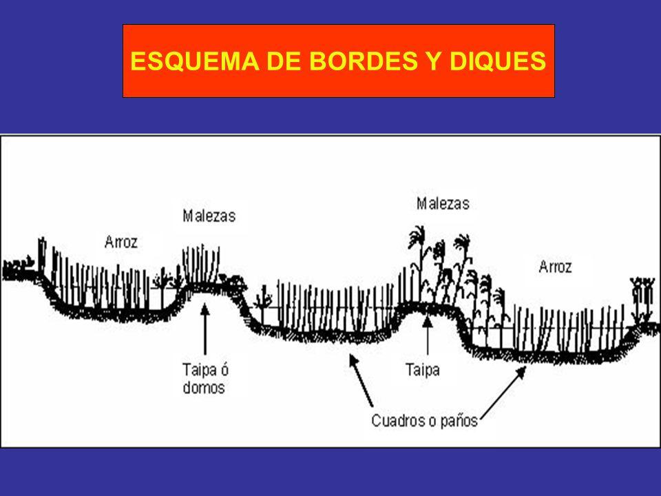 ESQUEMA DE BORDES Y DIQUES