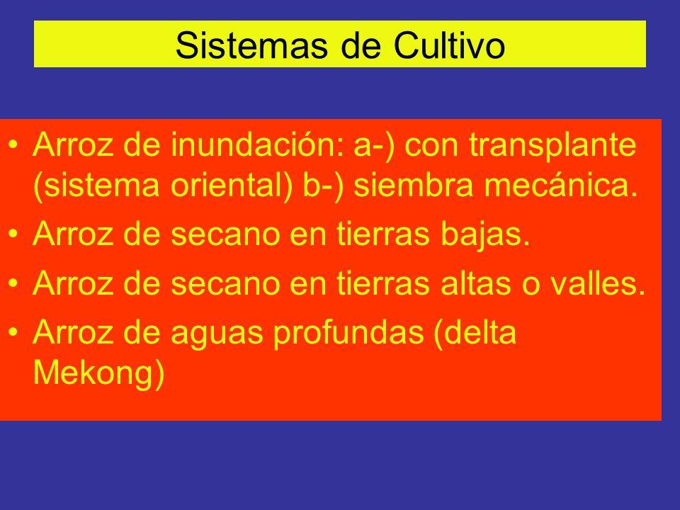 Sistemas de Cultivo Arroz de inundación: a-) con transplante (sistema oriental) b-) siembra mecánica.