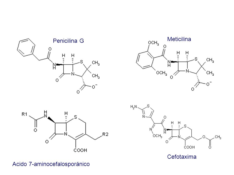 Meticilina Penicilina G Cefotaxima Acido 7-aminocefalosporánico