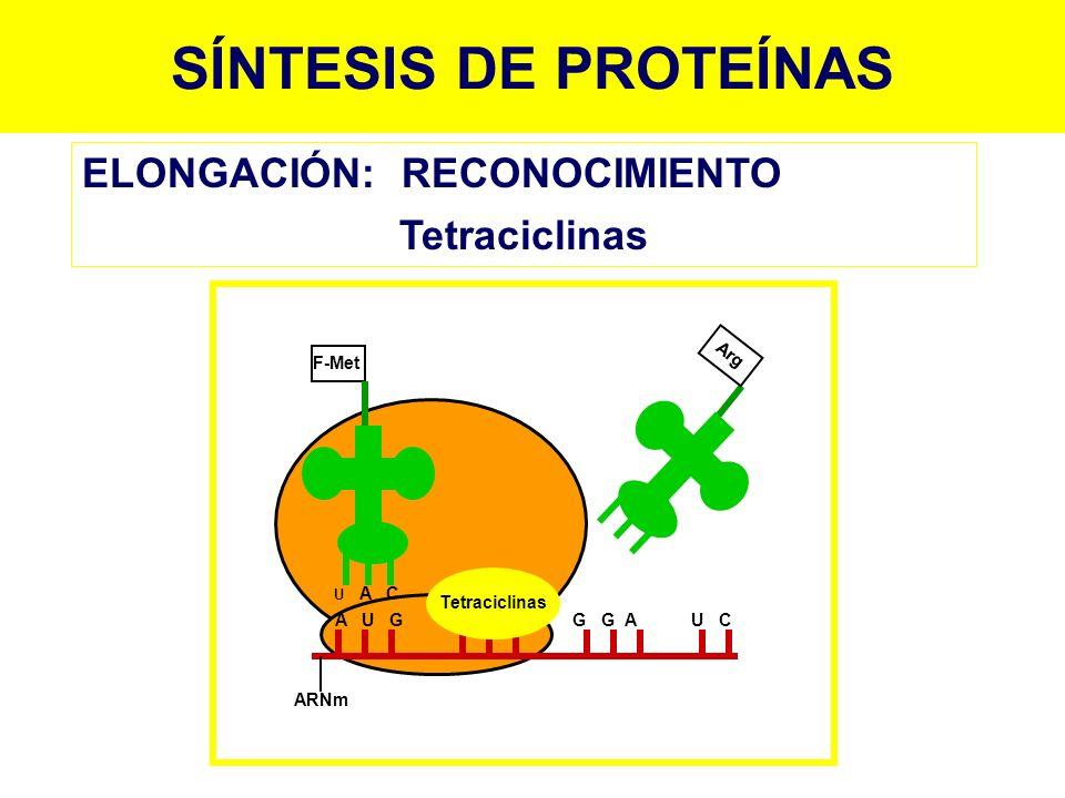 SÍNTESIS DE PROTEÍNAS ELONGACIÓN: RECONOCIMIENTO Tetraciclinas Arg