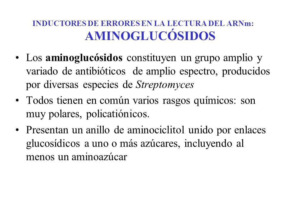 INDUCTORES DE ERRORES EN LA LECTURA DEL ARNm: AMINOGLUCÓSIDOS