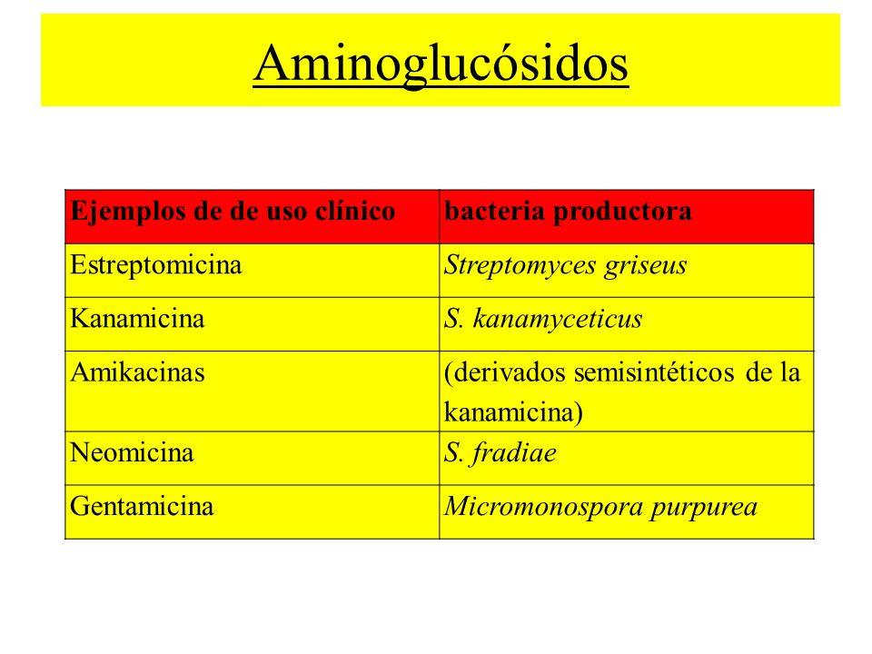 Aminoglucósidos Ejemplos de de uso clínico bacteria productora