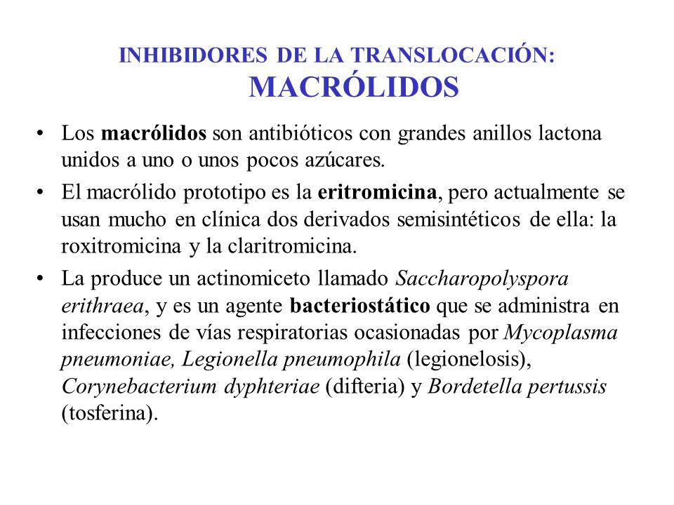 INHIBIDORES DE LA TRANSLOCACIÓN: MACRÓLIDOS