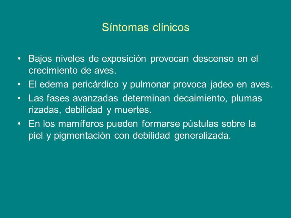 Síntomas clínicos Bajos niveles de exposición provocan descenso en el crecimiento de aves. El edema pericárdico y pulmonar provoca jadeo en aves.