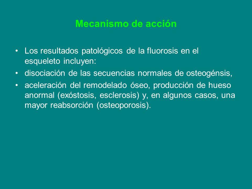 Mecanismo de acción Los resultados patológicos de la fluorosis en el esqueleto incluyen: disociación de las secuencias normales de osteogénsis,