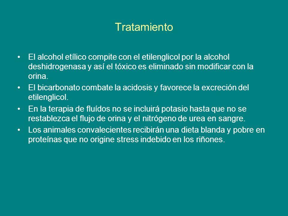 Tratamiento El alcohol etílico compite con el etilenglicol por la alcohol deshidrogenasa y así el tóxico es eliminado sin modificar con la orina.