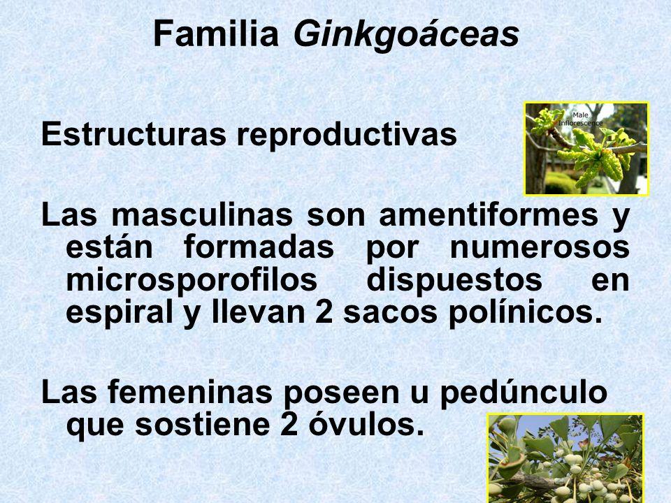 Familia Ginkgoáceas Estructuras reproductivas
