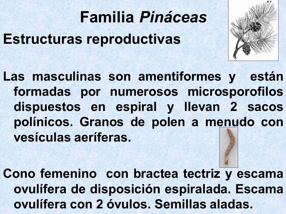 Familia Pináceas Estructuras reproductivas
