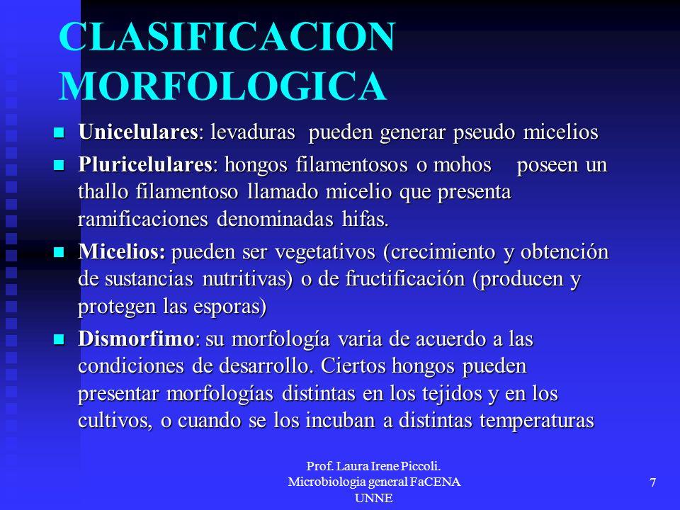 CLASIFICACION MORFOLOGICA