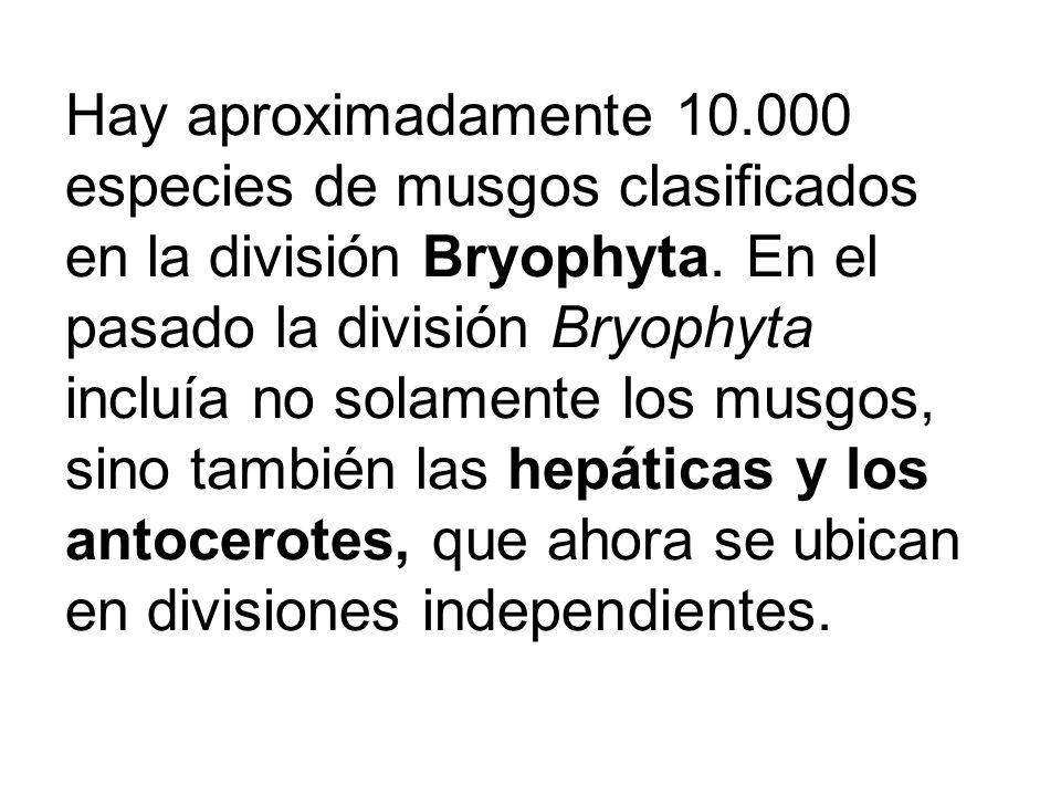 Hay aproximadamente 10.000 especies de musgos clasificados en la división Bryophyta.