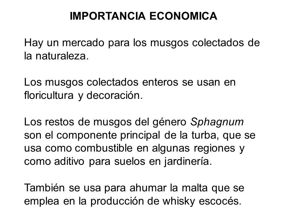 IMPORTANCIA ECONOMICA