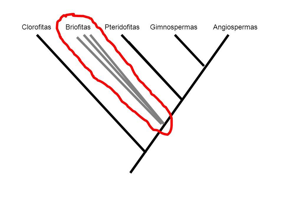 Clorofitas Briofitas Pteridofitas Gimnospermas Angiospermas