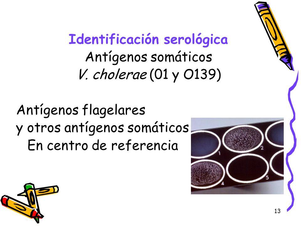 Identificación serológica