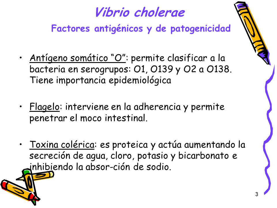 Vibrio cholerae Factores antigénicos y de patogenicidad