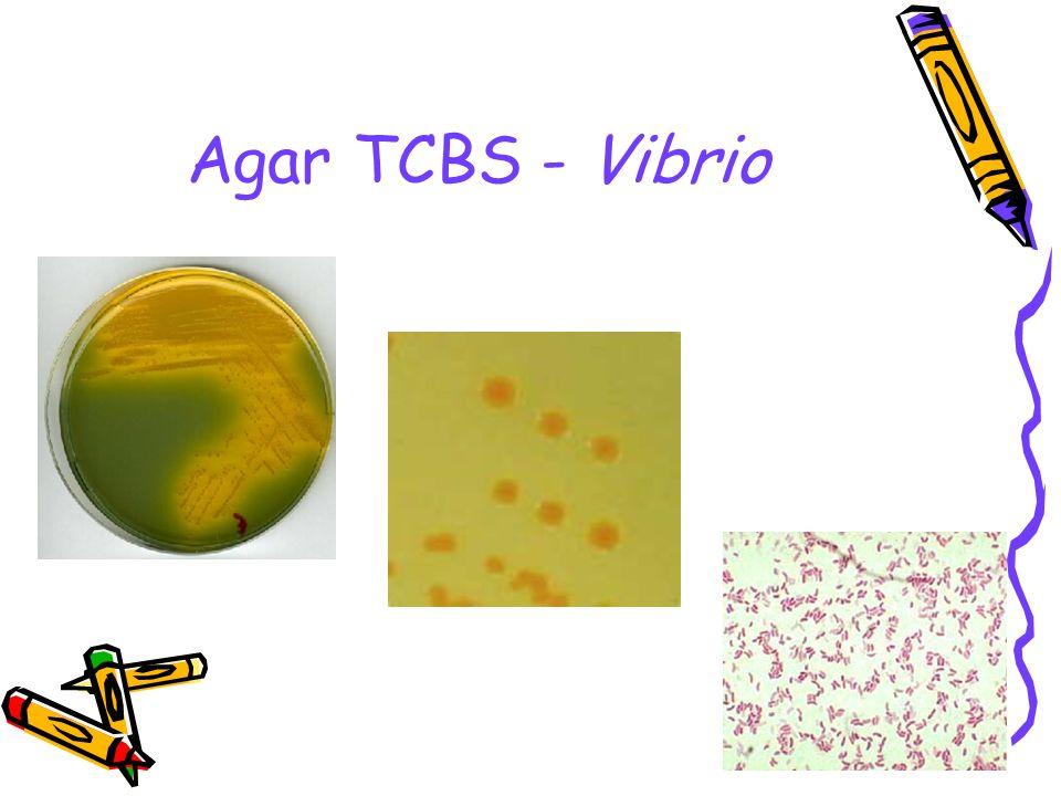 Agar TCBS - Vibrio