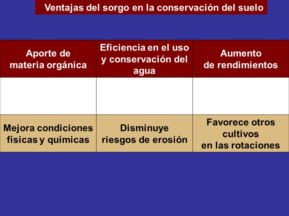 Ventajas del sorgo en la conservación del suelo
