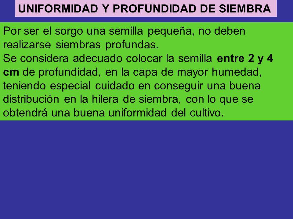UNIFORMIDAD Y PROFUNDIDAD DE SIEMBRA