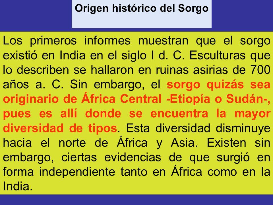 Origen histórico del Sorgo
