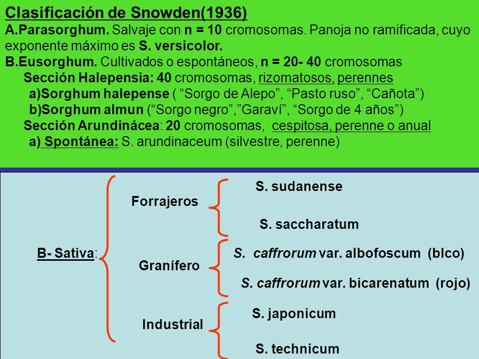 Clasificación de Snowden(1936)