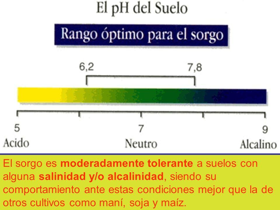 El sorgo es moderadamente tolerante a suelos con alguna salinidad y/o alcalinidad, siendo su comportamiento ante estas condiciones mejor que la de otros cultivos como maní, soja y maíz.
