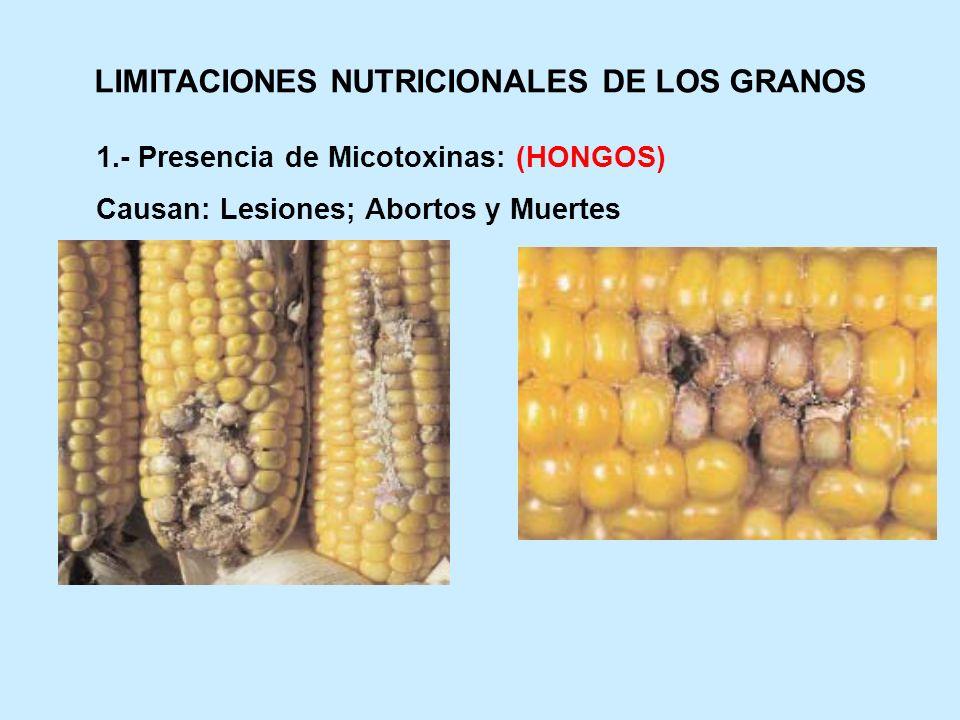 LIMITACIONES NUTRICIONALES DE LOS GRANOS