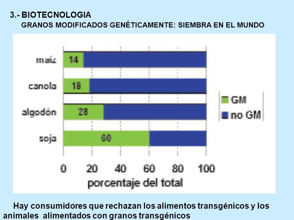 GRANOS MODIFICADOS GENÉTICAMENTE: SIEMBRA EN EL MUNDO