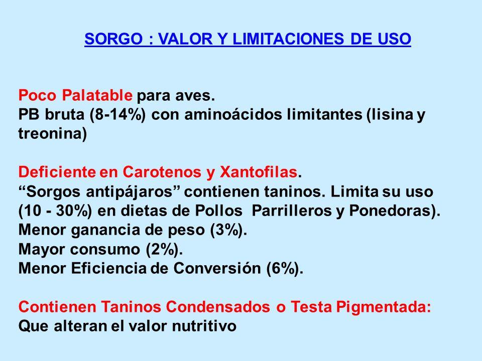 SORGO : VALOR Y LIMITACIONES DE USO