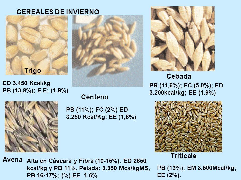 CEREALES DE INVIERNO Trigo Cebada Centeno Triticale Avena