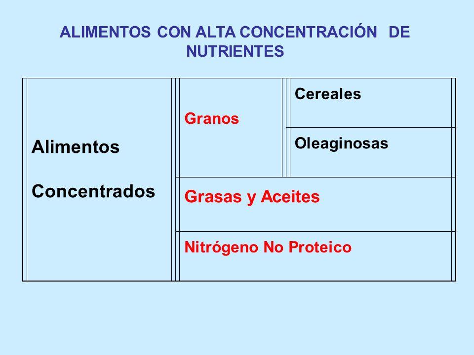 ALIMENTOS CON ALTA CONCENTRACIÓN DE NUTRIENTES