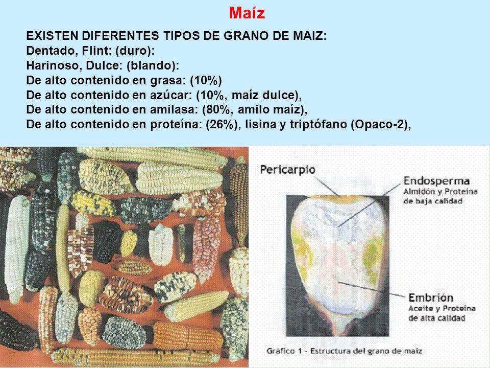 Maíz EXISTEN DIFERENTES TIPOS DE GRANO DE MAIZ: