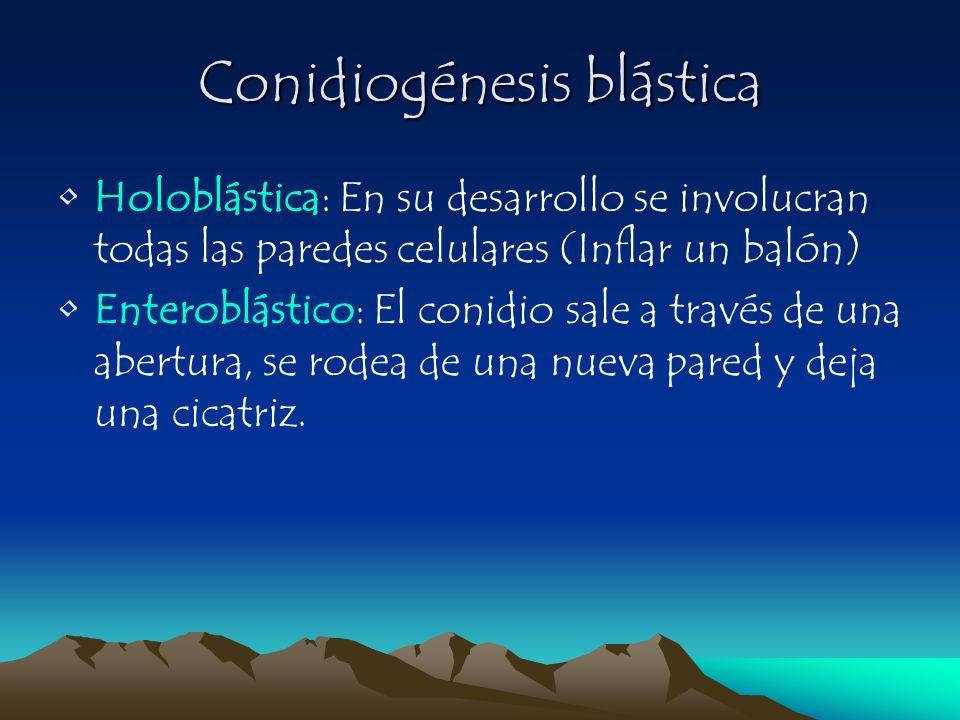 Conidiogénesis blástica