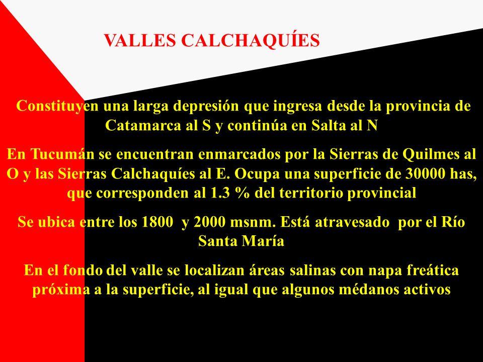 VALLES CALCHAQUÍES Constituyen una larga depresión que ingresa desde la provincia de Catamarca al S y continúa en Salta al N.