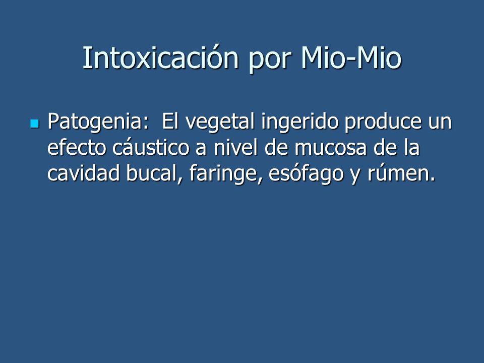 Intoxicación por Mio-Mio