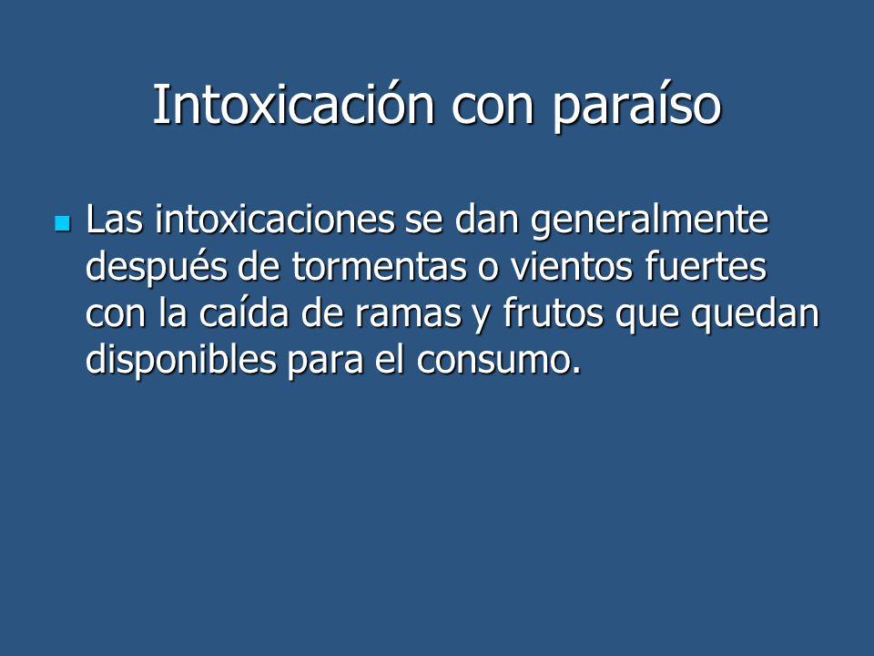 Intoxicación con paraíso