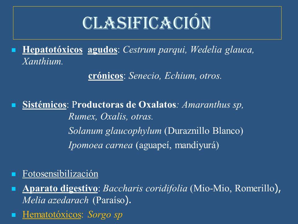 CLASIFICACIÓN Hepatotóxicos agudos: Cestrum parqui, Wedelia glauca, Xanthium. crónicos: Senecio, Echium, otros.