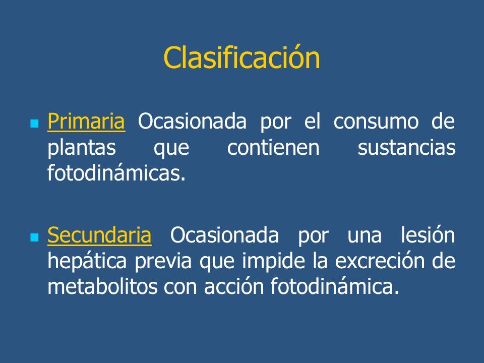 Clasificación Primaria Ocasionada por el consumo de plantas que contienen sustancias fotodinámicas.