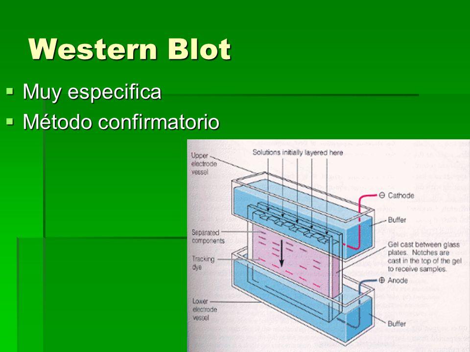 Western Blot Muy especifica Método confirmatorio